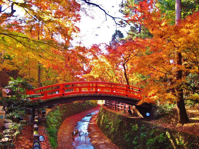 京都 北野天満宮 もみじ苑 昼間の様子