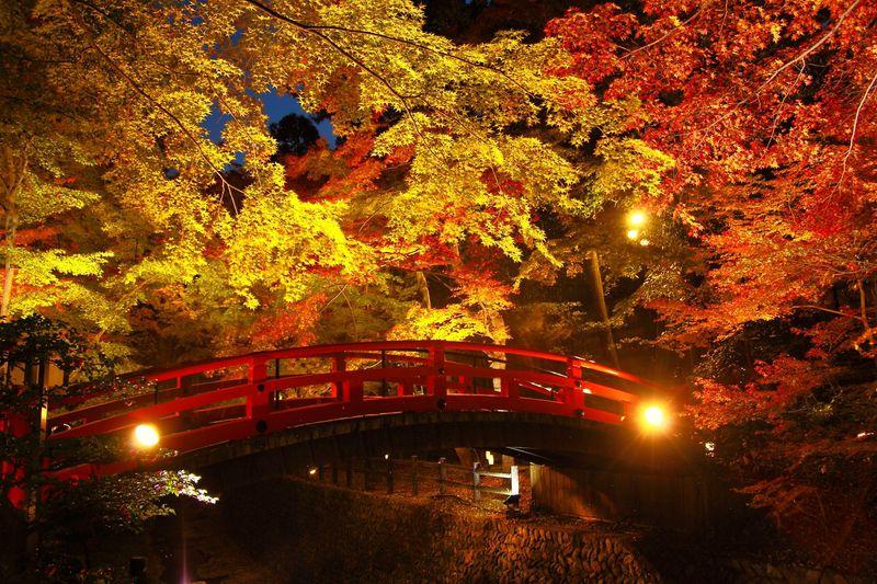 京都 北野天満宮 もみじ苑 夜間ライトアップの様子